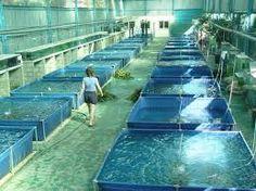 Resultado de imagen para cultivo de peces en estanques