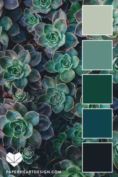 Succulent Color Palette: Blue-Green Almost Monochromatic Color Scheme Succulent colors. Green Color Pallete, Color Schemes Colour Palettes, Green Paint Colors, Monochromatic Color Scheme, Green Color Schemes, Jewel Tone Colors, Jewel Tones, Blue Palette, Cool Colour Palette