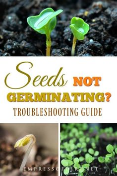 Organic Gardening Supplies Needed For Newbies If Your Seeds Are Not Germinating, This Troubleshooting Guide Will Help You Determine Why. Fall Vegetables, Growing Vegetables, Veggies, Garden Seeds, Planting Seeds, Vegetable Garden Planning, Vegetable Gardening, Veggie Gardens, Organic Gardening Tips