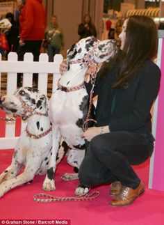 Star guest: Olympic medal winning cyclist Victoria Pendleton was manning the Eukanuba stand inside the NEC Victoria Pendleton, Olympic Medals, Pet Id, Wild Hearts, Sassy, Hero, Horses, Star, Dogs