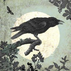 Crow Iillustration by Alan Baker