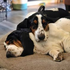 The best thing about having a basset bro is the built-in pillow neck. Basset Puppies, Basset Hound Dog, Cute Dogs And Puppies, I Love Dogs, Doggies, Animals Beautiful, Cute Animals, Bassett Hound, Bloodhound