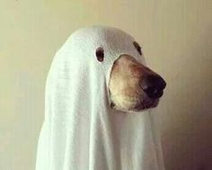 17 adorable dogs dressed as ghosts adorable dogs dog dresses and dog halloween costume for maggie publicscrutiny Images