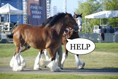 8 things we know we shouldn't do around horses, but do anyways...- HorseNation