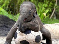 Junior soccer.