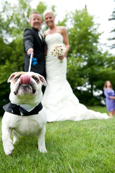 You include your pup in all important events because they are a part of the family, too.  Doodie Pack comes in black for every formal occassion.