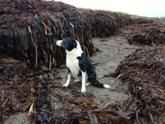 Just inspecting the pile of kelp that I ordered 😜🐾🐾