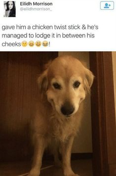 27 Funny Pictures of The Day