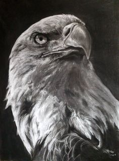 Original Animal Drawing by Paul Mwamba Lion Live Wallpaper, Eagle Wallpaper, Eagle Sketch, Bird Sketch, Charcoal Sketch, Charcoal Drawing, Black And White Drawing, Black And White Pictures, Animal Drawings
