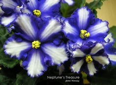 Neptune's treasure (Сокровище Нептуна)  Пасынок 24.09