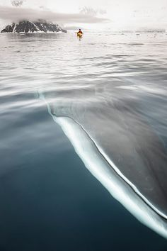 """""""While sea-kayaking in Neko Harbour in the Antarctic peninsula, Andrew Peacock captured an extraordinary sight: an inquisitive minke whale passing within arm's-reach of the flotilla of kayaks. Best of all, he managed to capture the moment on camera"""" (via The Guardian)"""