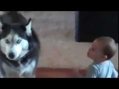 This dog and baby are having some sort of dialogue. I don't know what it is, but it cracks me up. I've watched it a dozen times already.