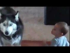 Dog imitating Baby