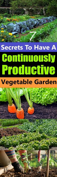 Don't you want a garden that will not only produce a bountiful harvest of fresh vegetables but also produce them continuously? #vegetablegardening