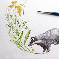 Progress on a little Badger Wreath #instadaily #cute #love #life #flower #flowers #instaillustration #illustration #illustrator #nature #paint #painting #draw #drawing #sketch #sketching #widlife #animal #badger #harrypotter #watercolour #sketchbook #winter #hogwarts #christmas #art #design #hufflepuff