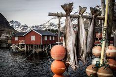 De Reine à Å - Iles Lofoten, Norvège, hiver 2014