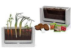 A great way to teach children how plants grow!