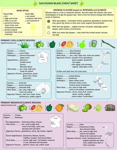 sauvignon blanc in infographic