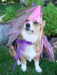 Corgi princess for my cake day - Imgur