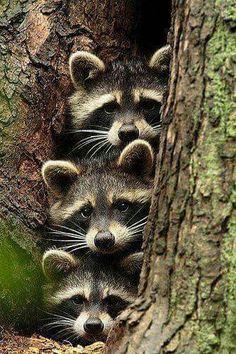 69 best animals images on pinterest adorable animals animal