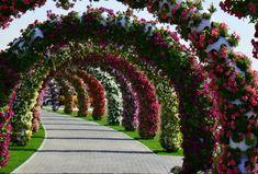 DUBAI MIRACLE GARDEN - Detalhes do imenso jardim florido nos Emirados Árabes.