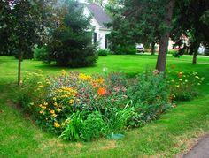 "Still Waters--Notes from a Virginia Shire: ""Rain Garden"""
