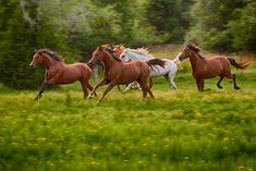 horses background pictures - Google Search