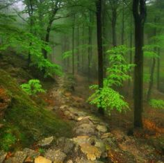 Image uploaded by Fred. Find images and videos on We Heart It - the app to get lost in what you love. Visit Poland, Enchanted Wood, Fred, Forest Path, Peaceful Places, Kaito, Day Tours, Paths, The Good Place