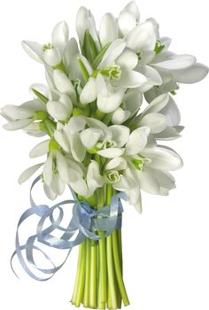ღϡ₡ღ Snowdrops bouquet Beautiful Bouquet Of Flowers, Tulips Flowers, Flower Bouquets, Share Pictures, Free Pictures, Animated Gifs, French Flowers, Dark Blue Background, Blue Dream