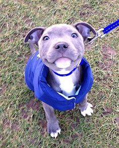 You would have too be dead or heartless, Not Too Fall In Love With This Face Wouldn't You????? Or am I just a big softy????? http://www.turmericfordogs.com/blog