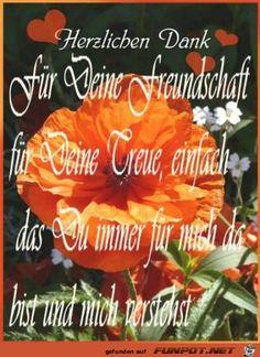 ein Bild für's Herz 'Danke-fuer-deine-Freundschaft27-20.jpg' von Edith. Eine von 16348 Dateien in der Kategorie 'Herziges' auf FUNPOT.