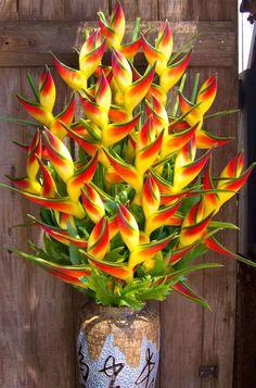 Tropical Flower Arrangements, Church Flower Arrangements, Church Flowers, Unique Flowers, Exotic Flowers, Tropical Flowers, Beautiful Flowers, Cactus Flower, Purple Flowers
