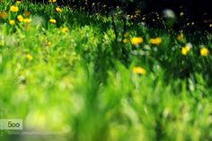 Wild Flowers III by sypaik