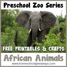 Preschool Zoo Series FREE Printables and Crafts: African Animals