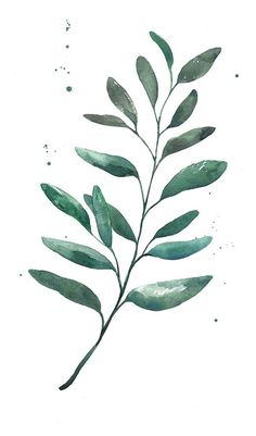 Watercolor - Leaf on Behance More