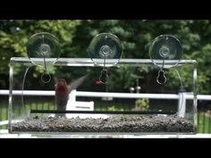 The Window Bird Feeder by Tranquil Outdoors is Designed to accommodate both large and small birds.  Available exclusively on Amazon http://www.amazon.com/Large-Window-Feeder-Tranquil-Outdoors/dp/B0108LL5XG