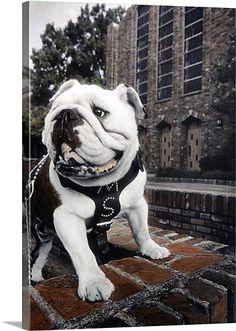 Mississippi State Photographs Bully the Bulldog- Boys room
