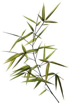 bamboo | STILL (mary jo hoffman)