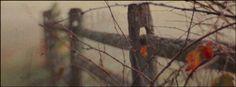 Autumn Facebook Cover Cover Wallpaper, Fall Wallpaper, Wallpaper Backgrounds, Iphone Backgrounds, Wallpapers, Halloween Facebook Cover, Cover Pics For Facebook, Fb Cover Photos, Facebook Timeline Photos