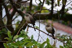 Los visitantes de mi patio. #birds #nature