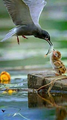 The way cats and dogs eat is related to their animal behavior and their different domestication process. Pretty Birds, Love Birds, Beautiful Birds, Animals Beautiful, Nature Animals, Animals And Pets, Animal Photography, Nature Photography, Flying Photography