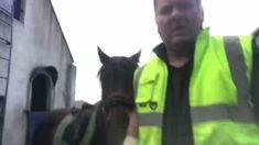 Backing Charlie for the first time. Connemara x Irish Draught Connemara, Horses For Sale, Horse Training, Irish, Batman, Superhero, Fictional Characters, Animals, Irish People