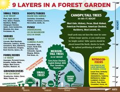 Permaculture - 9 Layers in a Forest Garden - Dr. Axe