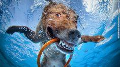 CNN.co.jp : 犬の「変顔」写真が話題に、水中のユニークな表情を撮影 - (2/3)