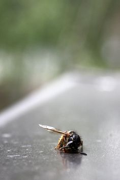 Insect Photography, Insects