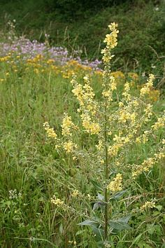 Blumen am Wegesrand bestimmen - macht Urlaubsgefühle http://www.tinto.de/tipps/blumen-am-wegesrand-bestimmen-macht-urlaubsgefuhle/