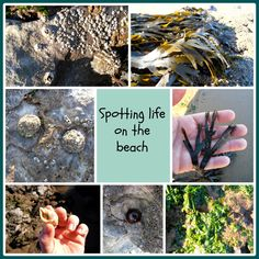 Spotting Life on the Beach with Wild Family Fun