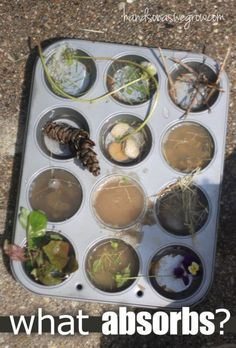 A water experiment to do with nature objects - what absorbs?