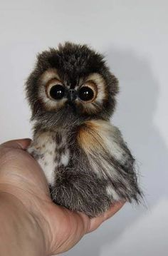 Ok, not fur, but still a sweet baby, owl named Shu By Averina Olesya - Bear Pile Baby Animals Pictures, Cute Animal Pictures, Animals And Pets, Owl Pictures, Animal Pics, Exotic Animals, Majestic Animals, Black Animals, Happy Animals