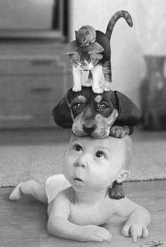baby, dog, cat